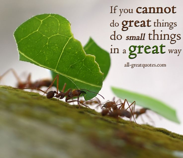 Best Quotes About Success If You Cannot Do Great Things Do Small