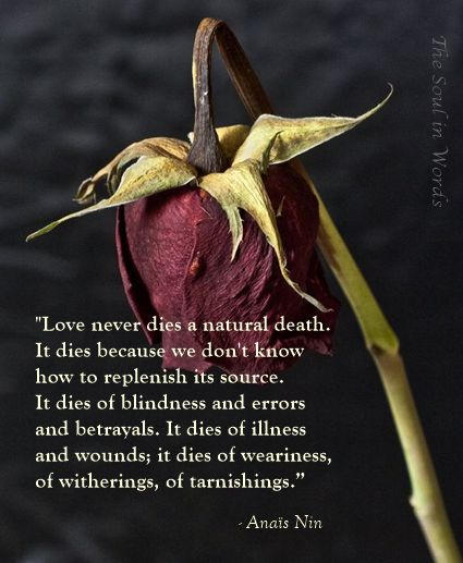Quotes About Love Love Never Dies A Natural Death Hall Of
